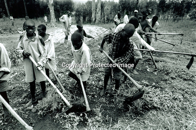 dicorwa00041 .Rwanda. Youth prisoners accused of the genocide in Rwanda in 1994 working in the fields in the youth prison on April 20, 1995 in Gitagata, Rwanda. About one million people were killed during a civil war in the country. .©Per-Anders Pettersson/iAfrika Photos