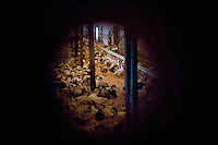 Young ducks are seen through a peep hole in the door of the hatchery at the Hudson Valley Foie Gras farm  in Ferndale, USA, 16 March 2006.