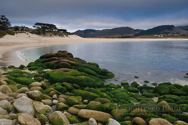 Algae covered rocks along the shoreline at Carmel River State Beach, Monterey Peninsula, California