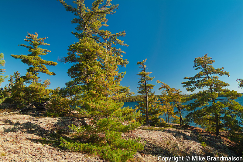White pines on rocky shoreline of Crow (Kakagi) Lake in Unorganized Kenora District and the township of Sioux Narrows-Nestor Falls<br />