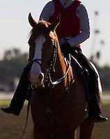 Shakleford coming off the track for trainer Dale Romans at Santa Anita Park in Arcadia California