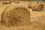 Rolled hay bale rolls in plowed cut field farm pasture, near Cambria, San Luis Obispo County, California