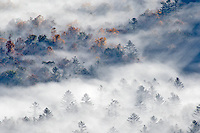 Elevated view of fog filled valley with trees emerging at sunrise, from Pounding Mill Overlook, Blue Ridge Parkway, Pisgah, National Forest near Brevard, North Carolina