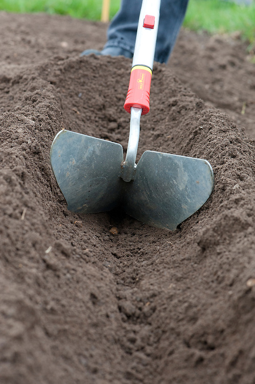 Using a ridger to dig a drill or trench about 15cm (6in) deep for planting seed potatoes.