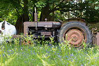 18.5.2020  Fordson Super Major in a Bluebell wood.<br /> ©Tim Scrivener Photographer 07850 303986<br />      ....Covering Agriculture In The UK....