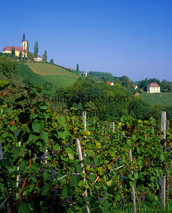 Austria, Styria, Kitzeck: wine-growing estate at Sausal Wine Toure