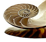Chambered Nautilus<br />