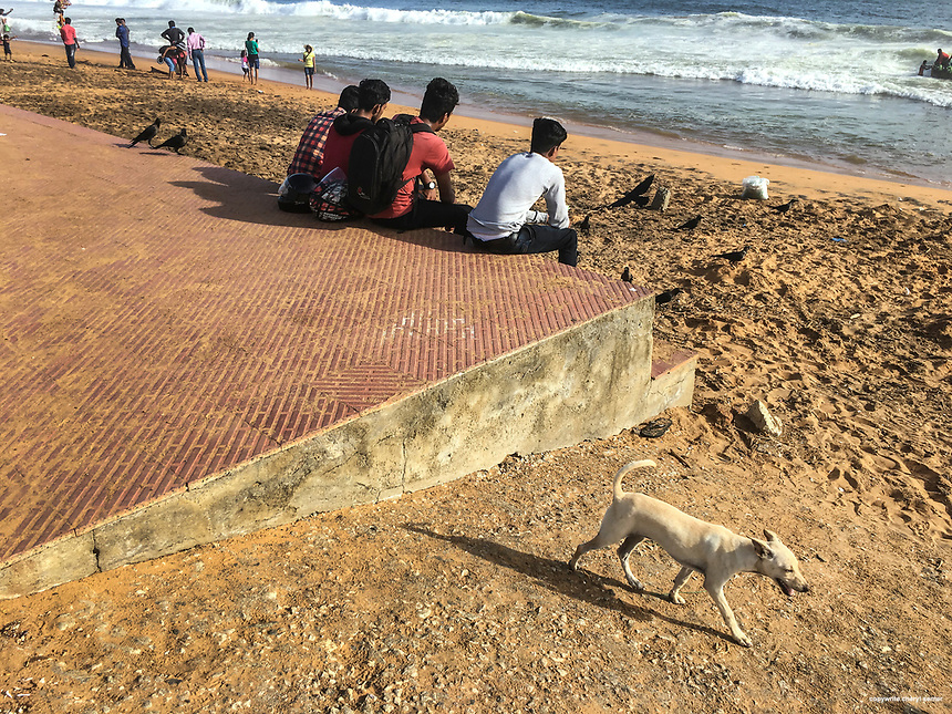 A young feral dog on the hunt for food at Sanghumugham Beach in Thiruvananthapuram, Kerala, India,  June 16, 2017.  The young dog was quite adept at digging up and eating tiny crabs.  (Photo by Cheryl Senter)
