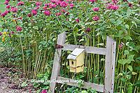 63821-20710  Birdhouse on rustic fence  in garden with Raspberry Wine Bee Balm (Monarda didyma 'Raspberry Wine')  Marion Co. IL
