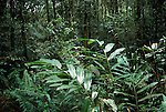 Jungle and Foilage, Poring Hot Springs, Sabah, Borneo, green, lush, tropical.Malaysia....