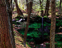 Seasonal waterfall in hemlock forest Hemlock Draw Preserve Baraboo Hills Wisconsin