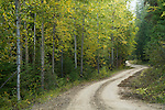 Idaho, North, Bonner County, Caribiu Mountain Road in the Kaniksu district of the Idaho Panhandle National Forest.