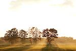 Europa, DEU, Deutschland, Nordrhein Westfalen, NRW, Rheinland, Niederrhein, Wachtendonk, Abendstimmung, Nebel, Dunst, Baeume, Kategorien und Themen, Natur, Umwelt, Landschaft, Jahreszeiten, Stimmungen, Landschaftsfotografie, Landschaften, Landschaftsphoto, Landschaftsphotographie, Wetter, Wetterelemente, Wetterlage, Wetterkunde, Witterung, Witterungsbedingungen, Wettererscheinungen, Meteorologie, Wettervorhersage....[Fuer die Nutzung gelten die jeweils gueltigen Allgemeinen Liefer-und Geschaeftsbedingungen. Nutzung nur gegen Verwendungsmeldung und Nachweis. Download der AGB unter http://www.image-box.com oder werden auf Anfrage zugesendet. Freigabe ist vorher erforderlich. Jede Nutzung des Fotos ist honorarpflichtig gemaess derzeit gueltiger MFM Liste - Kontakt, Uwe Schmid-Fotografie, Duisburg, Tel. (+49).2065.677997, ..archiv@image-box.com, www.image-box.com]