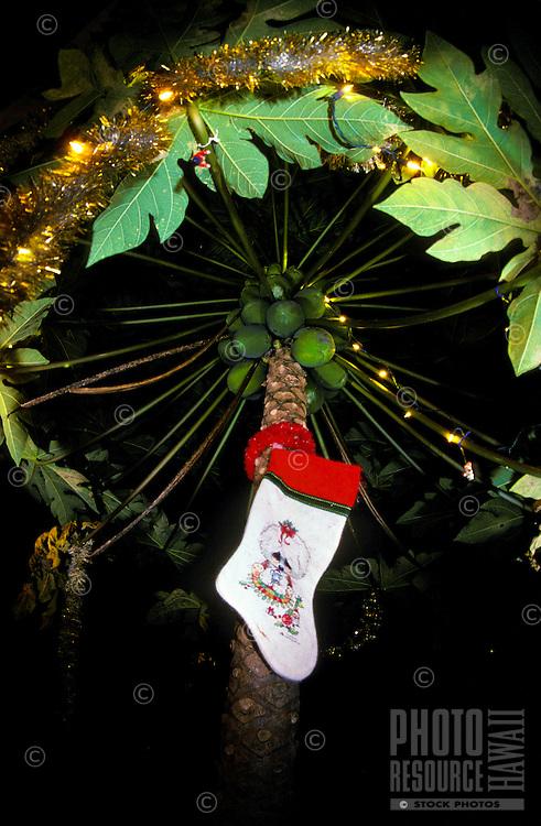 A Christmas stocking hangs from a tinsel draped papaya tree on the Big Island of Hawaii.
