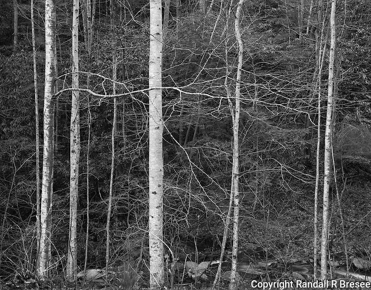 &quot;Trees Awaiting Spring&quot; Great Smoky Mountains National Park, Tennessee<br />