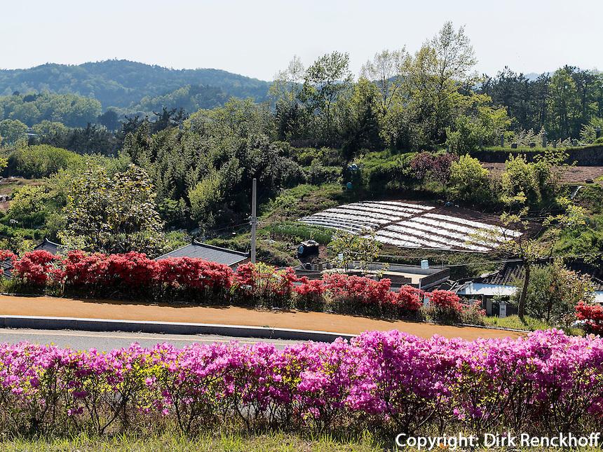 Park in Boseong, Provinz Jeollanam-do, S&uuml;dkorea, Asien<br /> Park  in Boseong, province Jeollanam-do, South Korea, Asia