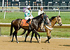 Rush Now before The Cape Henlopen Stakes Delaware Park on 6/28/12