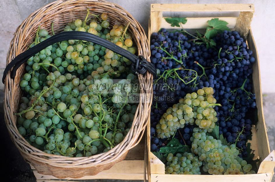 Europe/Croatie/Dalmatie/ Ile de Vis/ Komiza: Panier de raisin en vente dans les ruelles du village au moment des vendanges