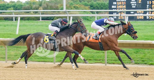 Traipse in Utopia winning at Delaware Park on 10/14/15