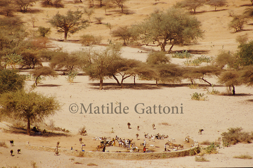 Eritrea - Gash Barka- Villagers collecting water from a well situated in the bed of the river. As a result of 30 years of war for independence against Ethiopia (from 1961 to 1991) and another 3 years from 1997 to 2000, there are 50,000 Eritreans currently living in internally displaced (IDP) camps throughout the country. These IDPs have fled three times in the last 10 years, each time because of renewed military conflict. They lived in relatives' homes when lucky enough, but mostly, the fled to the mountains, where they attempted to do what Eritreans do best, survive. Currently there is no Ethiopian occupation in Eritrea, but landmines prevent the IDPs from finally going home. .It is estimated that every Eritrean family lost two or three members to the war which makes the reality of the current emergency situation even more painful for Eritreans worldwide. Currently, the male population has been decreased dramatically, affecting the most fundamental socio-economic systems in the country. Among the refugee population, an overwhelming majority of families are female-headed, severely affecting agricultural production. For, IDPs in particular, 80% of households are female-headed..The unresolved border dispute with Ethiopia remains the most important drawback to Eritrea's socio-economic development, as national resources (human and material) continue to be prioritized for national defense. Eritrea is vulnerable to recurrent droughts and variable weather conditions with potentially negative effects on the 80 percent of the population that depend on agriculture and pastoralism as main sources of livelihood. The situation has been exacerbated by the unresolved border dispute, resulting in economic stagnation, lack of food security and increased susceptibility of the population to various ailments including communicable diseases and malnutrition..