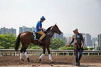SHA TIN,HONG KONG-APRIL 29: Dicton and his trainer,Gianluca Bietolini are in works for  the Audemars Piguet QEII Cup at Sha Tin Racecourse on April 29,2017 in Sha Tin,New Territories,Hong Kong (Photo by Kaz Ishida/Eclipse Sportswire/Getty Images)
