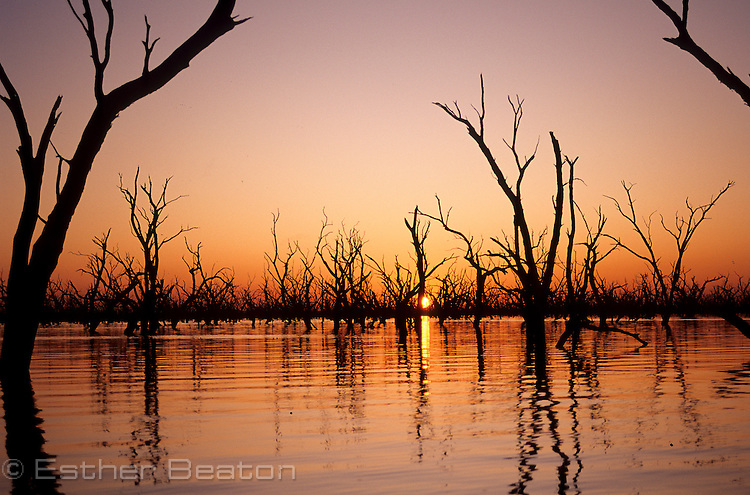 Barren Box Swamp, an irrigation dam. At sunrise. Riverina area west of  Griffith, New South Wales