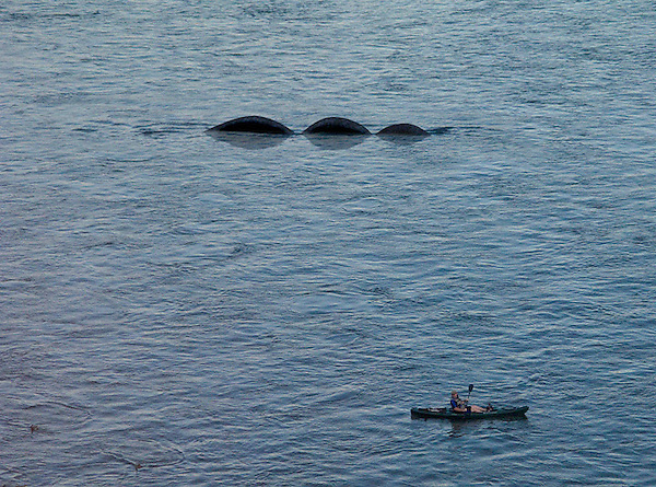 Lake Monster (Nessie) with canoeist