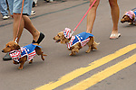 4th of July Parade.Dachshund