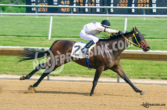 Big Zapple winning at Delaware Park on 5/30/15