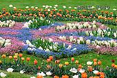 Luiz, FLOWERS, photos, BRLH8680,#f# Blumen, Natur, flores, naturaleza