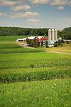 Hoffa Mill Road, Union County. Farmscape with corn fields.