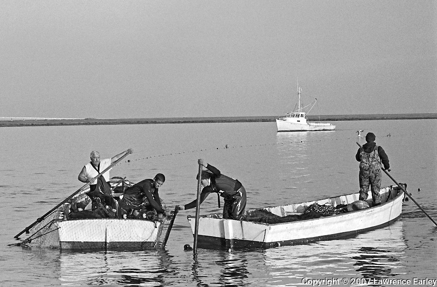 Fishermen attach the bunt net to the bunt stake in the last stage of the long-haul operation.  The runboat MISS BETTIE approaches in the distance.  Long-haul fishing is a traditional form of fishing in Core Sound.