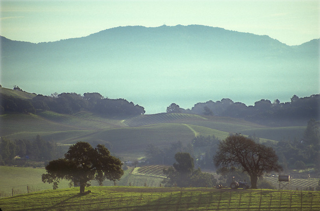 Scene of vineyard and hills west of city of Napa