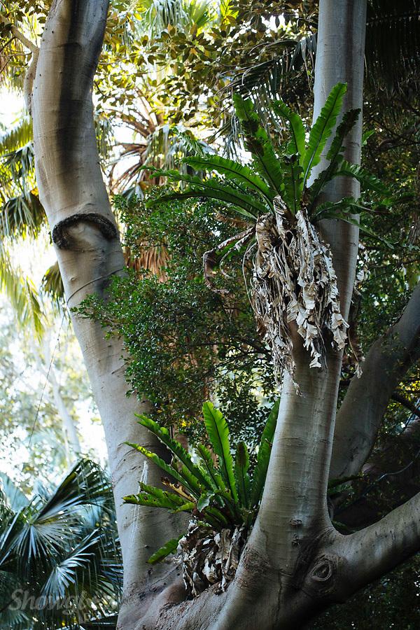 Image Ref: M274<br /> Location: Royal Botanical Gardens, Melbourne<br /> Date: 03.06.17