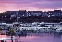 Europe/France/Bretagne/29/Finistère/Léon/Roscoff: Pêcheur dans le port à marée basse à l'aube