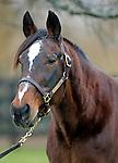 Sir Taurus (champion Standardbred, at Blue Chip Farms at age 28)