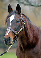 Sir Taurus (champion Standardbred, at Blue Chip Farms at age 28)