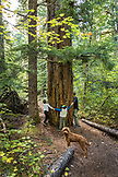 USA, Oregon, Oregon Cascades, a young family hikes out to Proxy Falls located off the McKenzie Pass on Hwy 242, the Wilamette National Forest