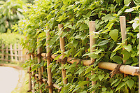 Stock photo:Lush green plants  intermixed with a charming rustic wooden fence leading somewhere in rural country surroundings.
