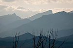 Trees, Snake Range, Wheeler Peak, Nev., and clouds from western Utah