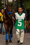 DEL MAR, CA  AUGUST 31: #5 Bast, ridden by Drayden Van Dyke, enters the paddock before  the Del Mar Debutante (Grade l) on August 31, 2019 at Del Mar Thoroughbred Club in Del Mar, CA. ( Photo by Casey Phillips/Eclipse Sportswire/CSM)