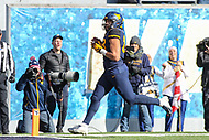 Morgantown, WV - November 10, 2018: West Virginia Mountaineers tight end Trevon Wesco (88) scores a touchdown during the game between TCU and WVU at  Mountaineer Field at Milan Puskar Stadium in Morgantown, WV.  (Photo by Elliott Brown/Media Images International)