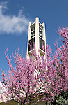 Carillon Bell Tower with purple trees.April 23, 2003..Photography by Mark A. Philbrick.GCS.803-30