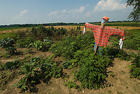 A scarecrow stands in a garden near a soybean field on a farm near St. Mary's. Ohio<br />