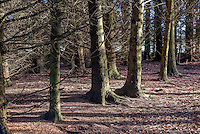 Woodland at Dinkling Green in the frost, Whitewell, Clitheroe, Lancashire.
