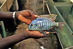 Man Holding Fish At Fish Farm