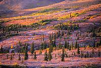 Tundra and taiga on frosty September morning, Denali National Park, Alaska