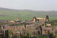 View of Volubilis, on a fertile plain in Northern Morocco, with the colonnaded facade which lined the Forum or marketplace and forms one side of the Roman Basilica, 217 AD, used as courts of justice and city governance on the right, and the tetrastyle Capitoline Temple, rebuilt 218 AD on an existing shrine, on the left. Volubilis was founded in the 3rd century BC by the Phoenicians and was a Roman settlement from the 1st century AD. Volubilis was a thriving Roman olive growing town until 280 AD and was settled until the 11th century. The buildings were largely destroyed by an earthquake in the 18th century and have since been excavated and partly restored. Volubilis was listed as a UNESCO World Heritage Site in 1997. Picture by Manuel Cohen