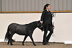 In hand classes. Unaffiliated 'Winter Woolies' Showing. Brook Farm Training Centre. Essex. UK. 28/10/2018. ~ MANDATORY Credit Garry Bowden/Sportinpictures - NO UNAUTHORISED USE - 07837 394578