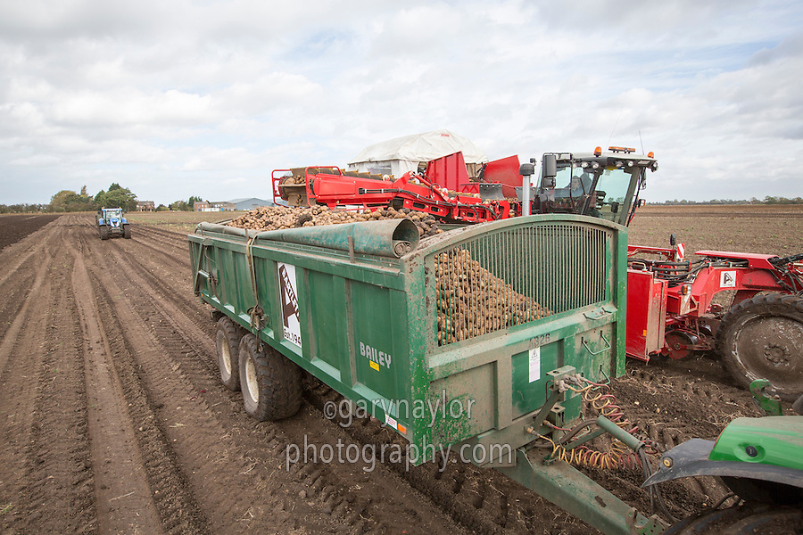 Harvesting potatoes, Grimme Varitron 220 - Lincolnshire, October
